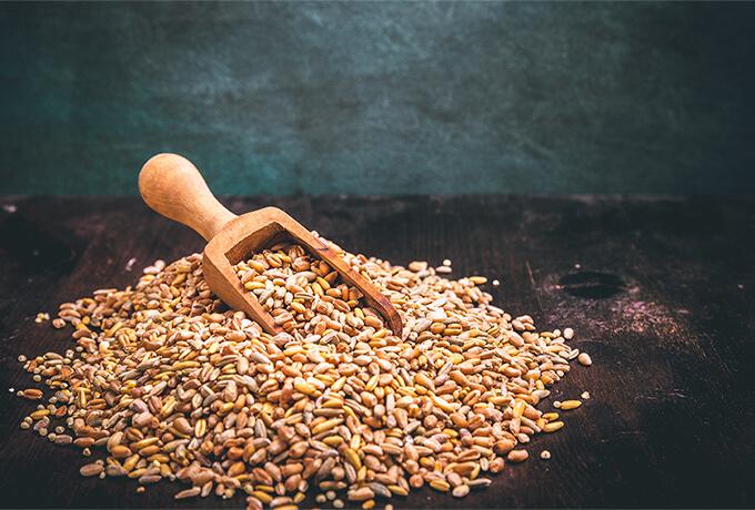 ライ麦や大麦なら大丈夫?アレルギーの可能性はあります